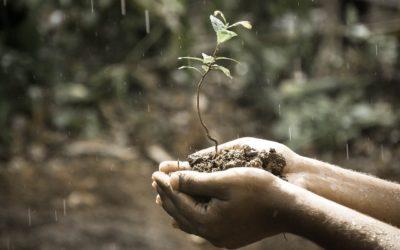 Regenwasser nutzen, Gebühren und Kosten vermeiden